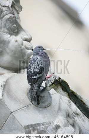 Pigeon Perched On A Water Fountain