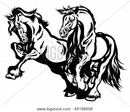 Two Draft Horses Black White