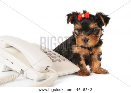 Cute Puppy Waiting For A Call