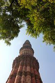 image of qutub minar  - qutub minar surrounded by leaves in blue sky