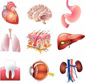 stock photo of heart surgery  - colorful human body parts detailed vector set - JPG