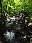 Trout Stream in Virginia