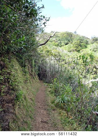 Cliffside Path On Tantalus Mountain