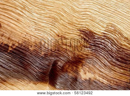 Closeup Abstract Palm Frond Wood Texture Background