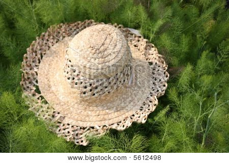 Straw hat on bed of herbs
