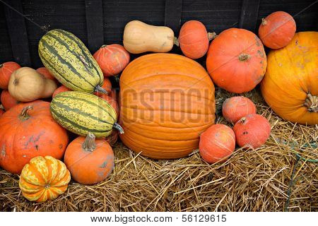 Gourds, Squash, and Pumpkins on Hay
