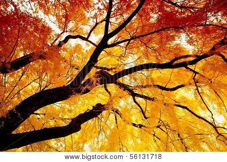 Autumn Infrared Willow