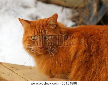 Tabby Cat Sitting Outside