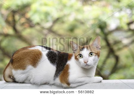 Cat on ledge