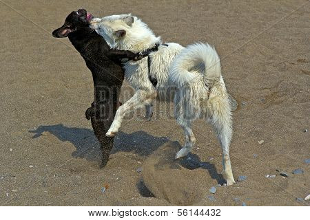 Two Playful Dogs