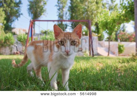 Cat Standing In Grass
