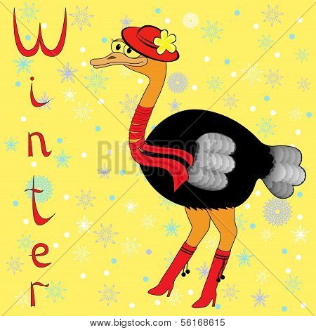 Why Ostrich Is So Cold In Winter?