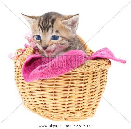 Blue Eyed Kitten In Basket