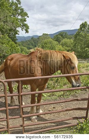 Russet Farm Horse On A Mountain Farm