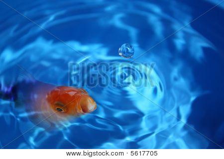 Fish Abstract