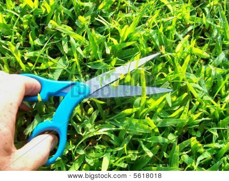 Going Green With Handy Scissors