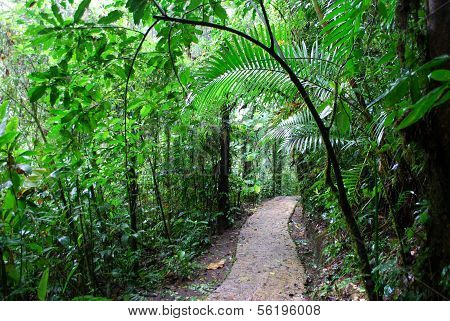Path in rainforest