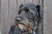 Trusty Terrier poster
