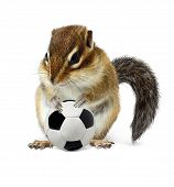 Funny Chipmunk With Soccer Ball Isolated On White