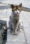 Stray Cat Sit On A Cobblestone Street