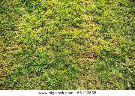 Full frame nature background of blades fresh green spring grass in a lawn or meadow in warm sunlight