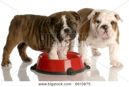 Two Puppies In Food Dish