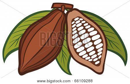 Cacao - cocoa beans