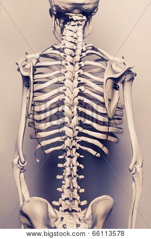 Stylized background  photo of back of human skeleton model - aged effect