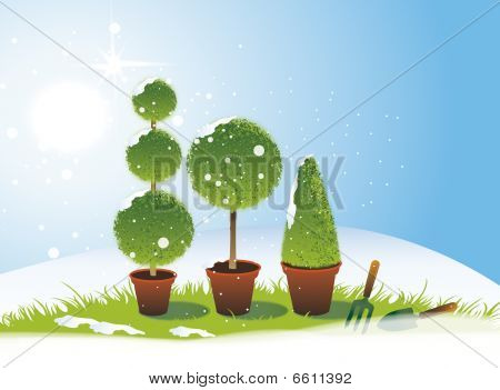Winter Topiary