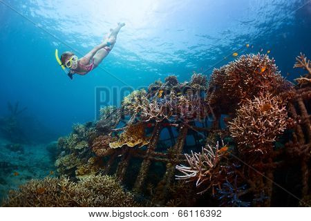 Young lady gliding underwater near metal structure with planted corals in Biorock restoration area in the village of Pemuteran. Bali island