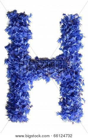 Letter H Made Of Flowers (cornflowers) Isolated On White Background