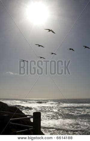 Sun Shining On Pacific Ocean With Seagulls