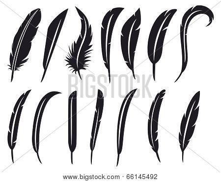 collection of feathers - feather collection