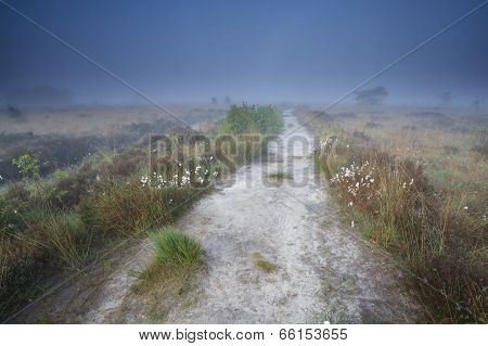 Narrow Path On Swamp In Misty Morning