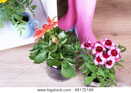 Flowers in  decorative pots and pink rain boots, on bricks background