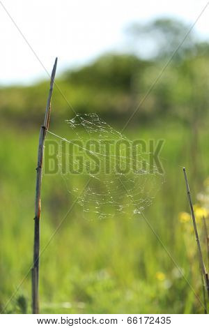 Spiderweb on beautiful green grass, outdoors