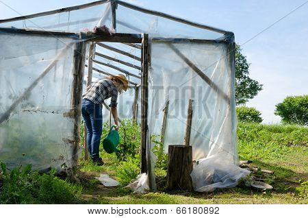 Woman With Water Plants In Conservatory