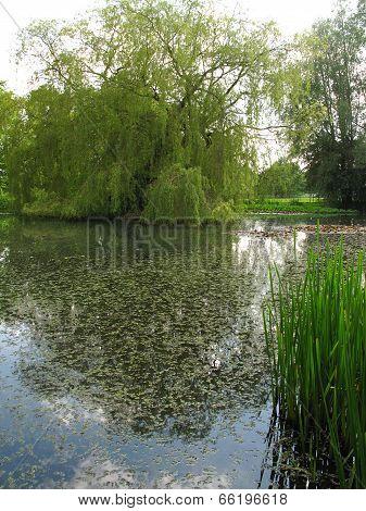 Lily Pond Landscape