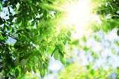 foto of green-blue  - Sun and green leaves - JPG