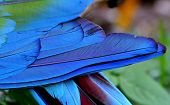 picture of green-winged macaw  - Close up of blue and green macaw bird feathers in great details - JPG