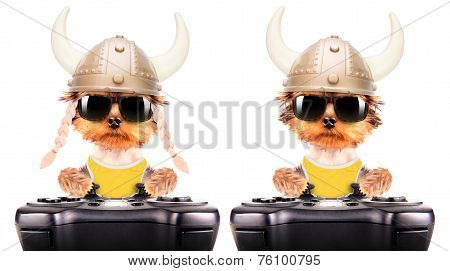 dog dressed up as a viking play on game pad
