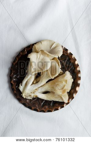 Pleurotus Mushrooms