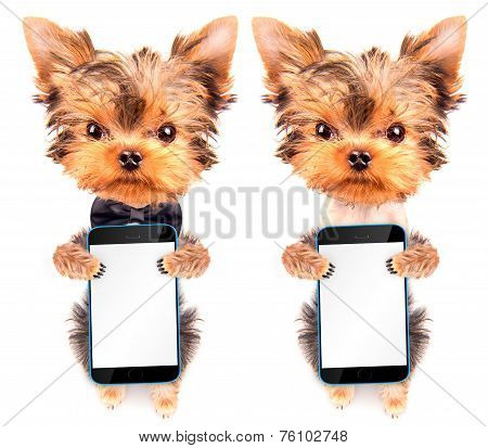 dog wearing a neck bow with phone