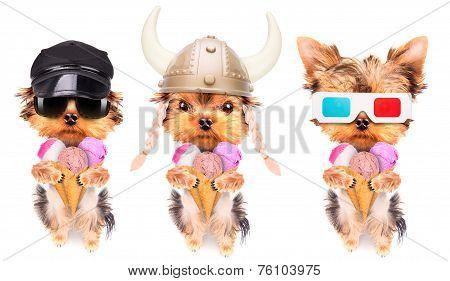 dog licking with ice cream