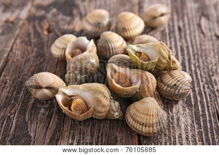 clam and whelk