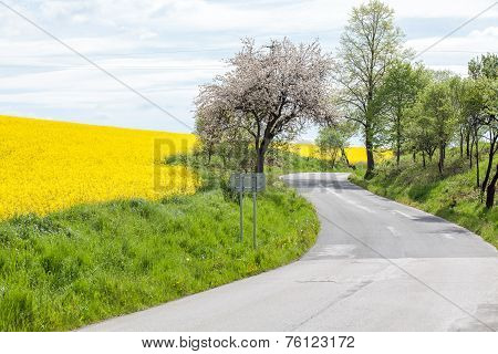 Rapeseed Field And Road