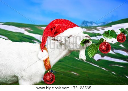 White New Year Goat On A Meadow