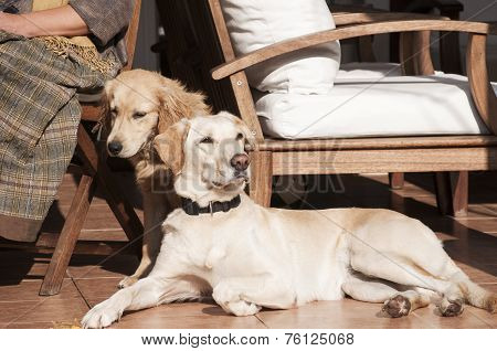 Dogs on fall sun lit porch