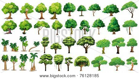 Diversity of trees set on white
