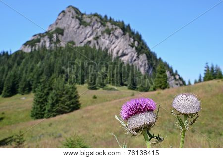 Mountain With Detail Of Thistle